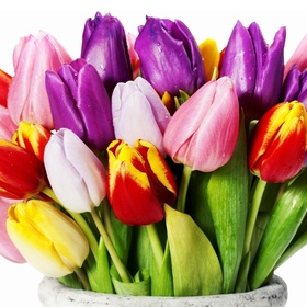 Planting colored tulips everywhere in the garden - Bucket List Ideas