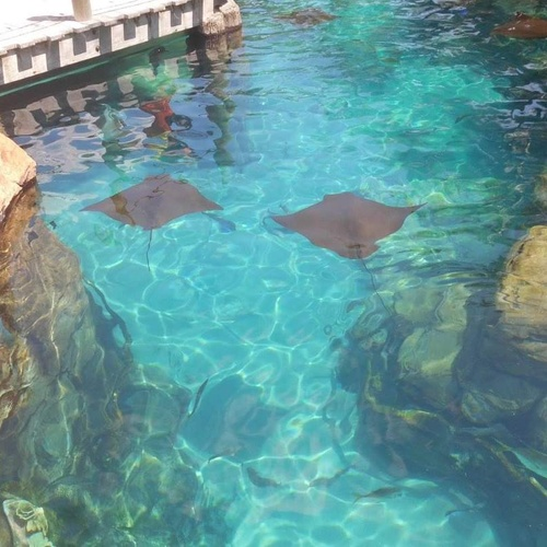 Visit discovery cove - Bucket List Ideas