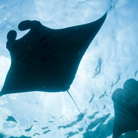 Swim with manta rays - Bucket List Ideas