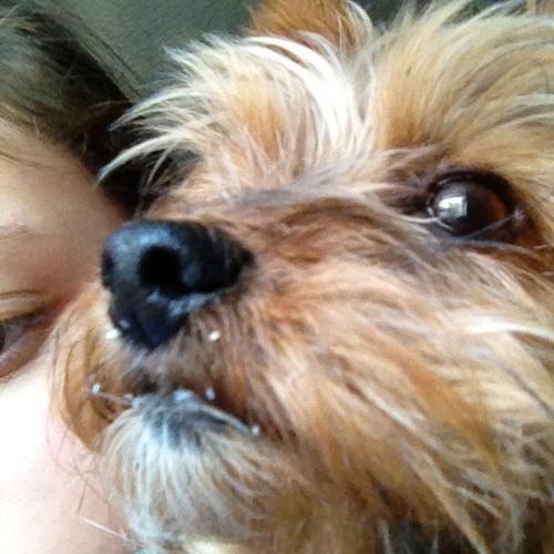 Adopt a shelter dog - Bucket List Ideas