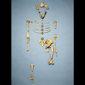 See Lucy (the oldest skeleton in the world) - Bucket List Ideas