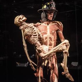 Visit Body Worlds - Bucket List Ideas