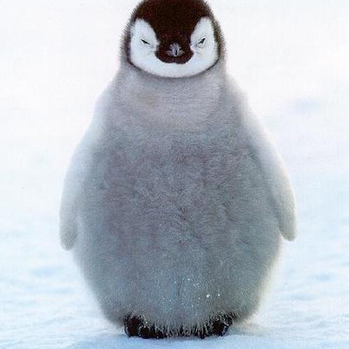 Pet a penguin - Bucket List Ideas