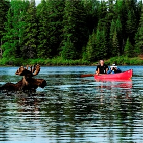 Kayak with Moose in Algonquin Park, Canada - Bucket List Ideas