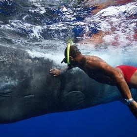 Pet a sperm whale - Bucket List Ideas