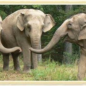 Visit an elephant sanctuary - Bucket List Ideas