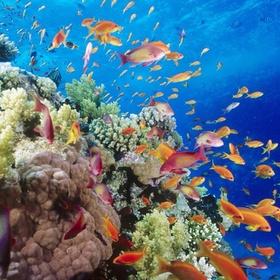 Deep sea fishing - Bucket List Ideas