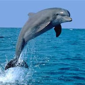 See a dolphin in the wild - Bucket List Ideas