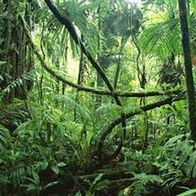 Visit the Amazon Rainforest - Bucket List Ideas
