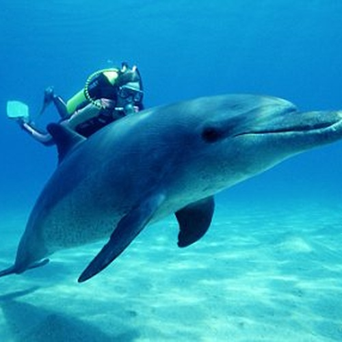 Swim with the Dolphins - Bucket List Ideas