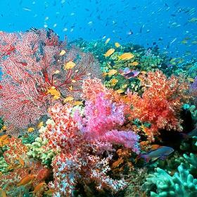 Scuba dive around coral reefs - Bucket List Ideas