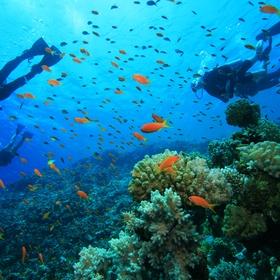 Try scuba diving - Bucket List Ideas