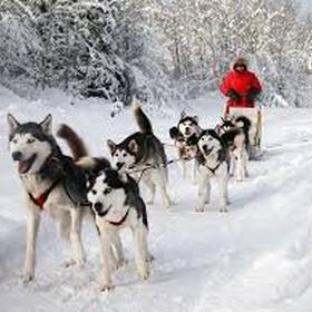 Ride a dog sled - Bucket List Ideas
