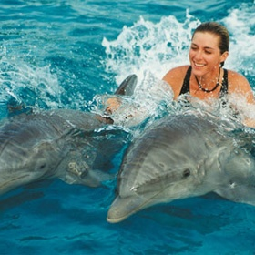 Go swimming with dolphins - Bucket List Ideas