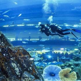 Swim in an aquarium - Bucket List Ideas