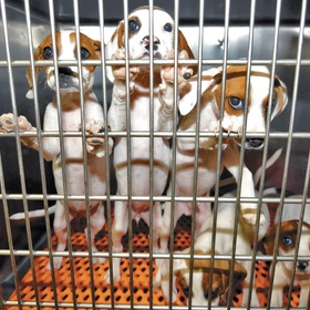 Adopt a Cat or Dog from the Animal Shelter - Bucket List Ideas