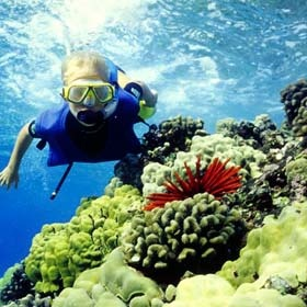 Go snorkeling at the great barrier reef - Bucket List Ideas