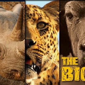 Photograph the big 5 of africa - Bucket List Ideas