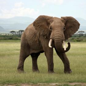Stroke an elephant - Bucket List Ideas