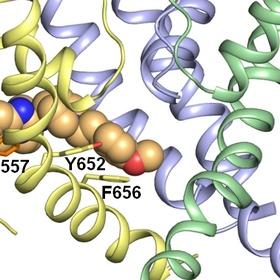 Learn the basics of Molecular Modelling, Bioinformatics and Computational Chemistry - Bucket List Ideas