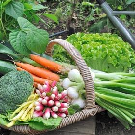 Cook with veggies I've grown - Bucket List Ideas