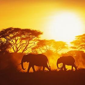 Go on a African Safari - Bucket List Ideas