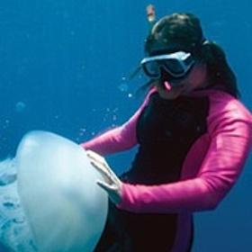 Become a Marine Biologist - Bucket List Ideas