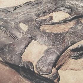 Find a Fossil - Bucket List Ideas