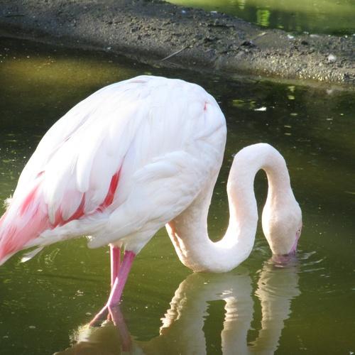 See a pink flamingo - Bucket List Ideas