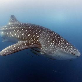 Go shark diving - Bucket List Ideas