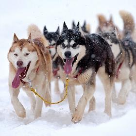 Ride a dog sledge - Bucket List Ideas