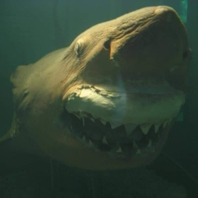 Visit Rosie the Shark - Bucket List Ideas