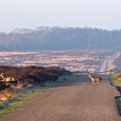 Visit Hoge Veluwe National Park, Netherlands - Bucket List Ideas