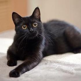 Get a black cat - Bucket List Ideas