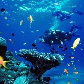 Go Diving - Bucket List Ideas