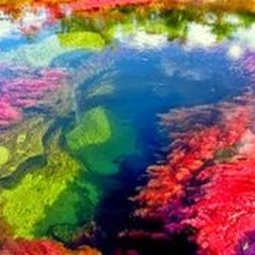 See The River of Five Colors in Colombia - Bucket List Ideas