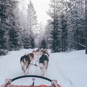 Go for a ride on a dog sled - Bucket List Ideas