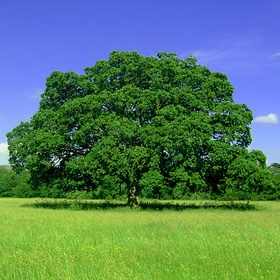 Plantar 30 árvores - Bucket List Ideas